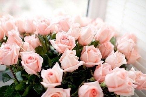 нежно розовые розы. картинки